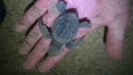 Маленькая Tortuga