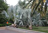 Парк Гарсия Санабрия (Parque Garcia Sanabria) —