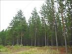 Лес, в котором мы ночевали 3 раза.