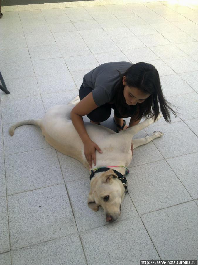Добрая собака Мила  (тоже периодически тусуется в хостеле)