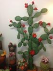марципановый кактус
