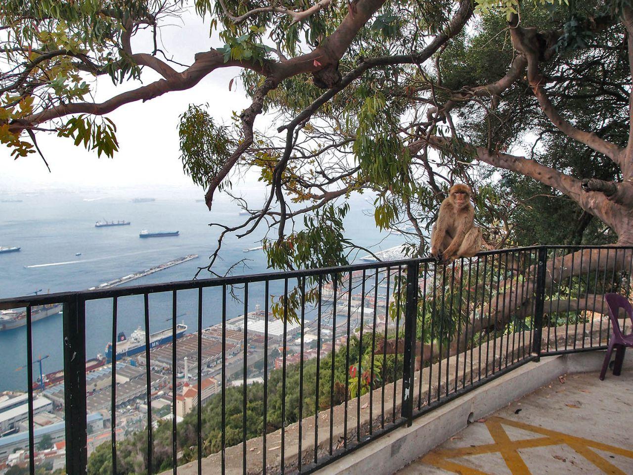 Встреча с Гибралтаром. День в особом мире Гибралтар