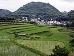 Я всегда с удовольствием смотрю на рисовые поля — настоящие гидротехнические сооружения.  Все в них ласкает взгляд   и четкость линий.  и нежнось зелени.