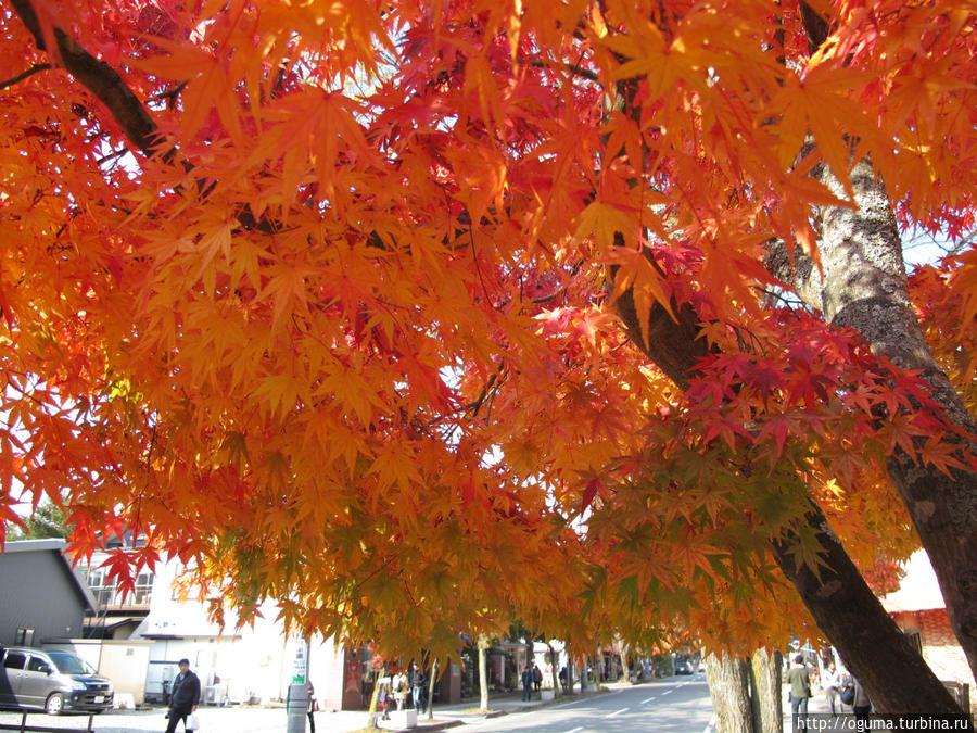 На улицах Каруизавы. Видно как красиво идёт переход цвета от зелёного к ярко-красному у осеннего клёна-момидзи. Япония