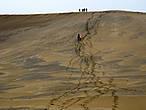 Вместо него на песке появились ниточки следов. Всего несколько человек прошло, а дюна безнадёжно испорчена. А мне она досталась чистой! Кто рано встаёт, как говорится.