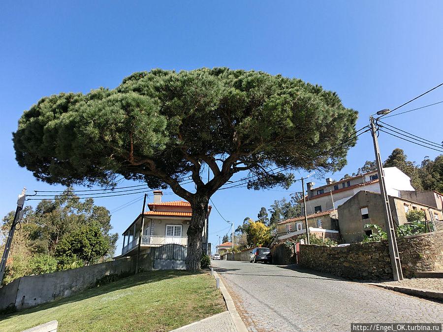 по дороге к отелю нас встречало вот такое чудесное дерево!