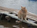 Котик-рыболов