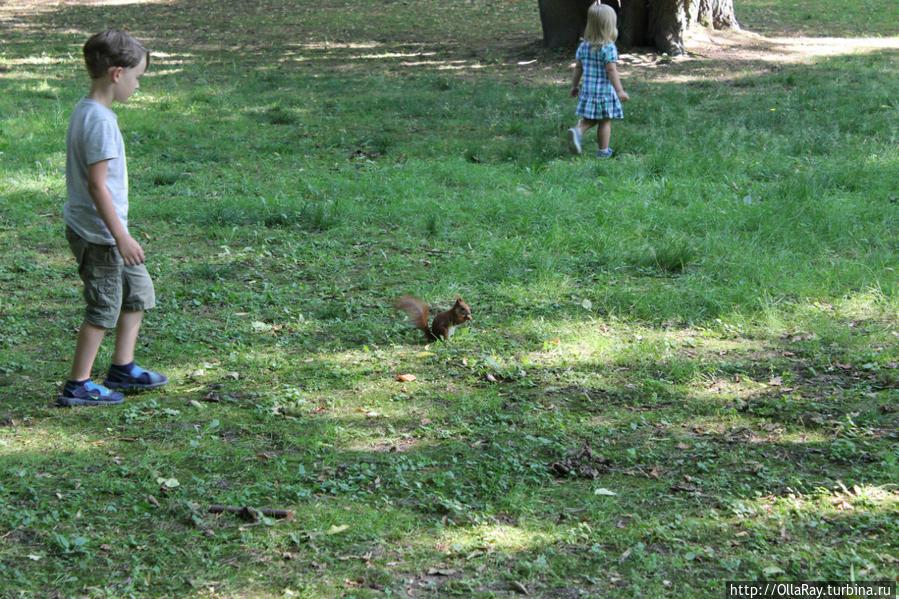 Дети ловят белок:)