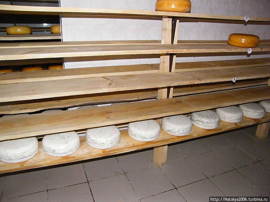 Внизу головки сыры, не покрытые специальным составом. Вверху — головки сыра с корочкой.