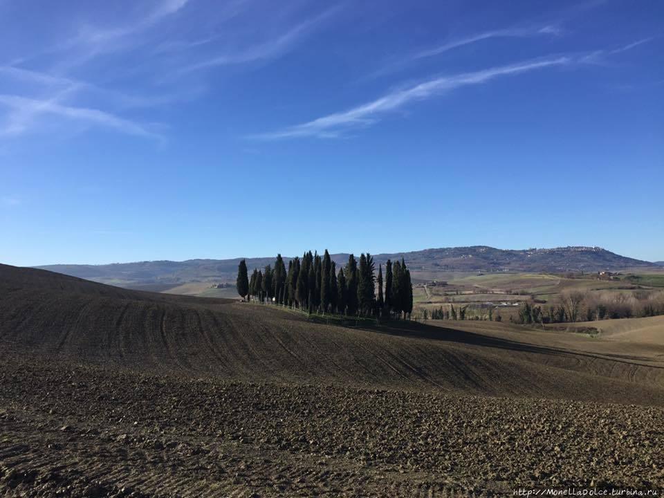 Кипарисовая роща ''il bosco di cipressi'' Сан-Куйрико-д'Орчия, Италия