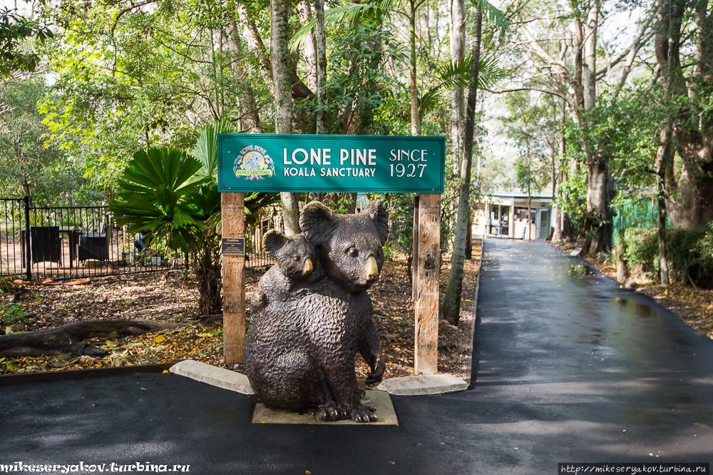 Заповедник коал Одинокая Сосна Индурупилли, Австралия