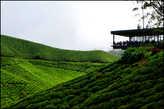 Туристический  центр  в  глубине  плантации.  Здесь  находится   кафе,  магазин  с  чаем,  информация  о  местности.  Тут  же  рядом   расположена   чайная  фабрика  и  административные  помещения.