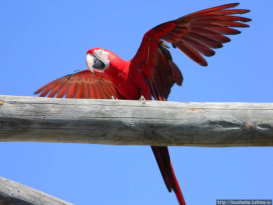 Непокорный попугай
