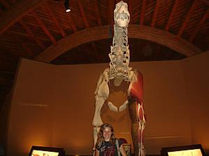 В триасовом зале есть экспонаты динозавров, обитавших в триасе (с 251 до 200 миллионов лет назад). Также показаны гастролиты, копролиты (окаменелый навоз), яйца и гнёзда. Скелет платеозавра — самый крупный в этом зале.