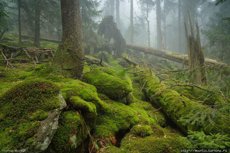 Баварские девственные лес
