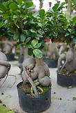 Растение с причудливой формы корнями
