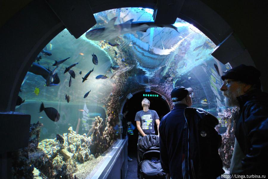 Тоннель в Бергенском аквариуме значительно уступает тоннелю аквариума в Барселоне...