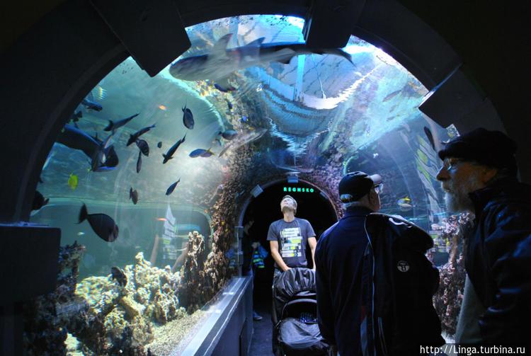 Тоннель в Бергенском аква