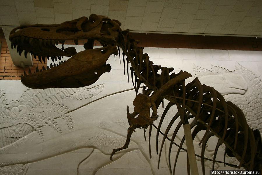 Скелет хищного динозавра Терапода Тарбозавра. Поздний мел — ок. 70 млн. лет назад.Монголия