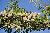 Чанана известна своими оливками: среди местных они считаются одними из лучших