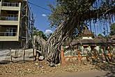 Такие интересные деревья растут вдоль дороги. Здесь вообще много чего интересного растет. Например, кокосы — на пальмах — прямо на территории всех отелей... *