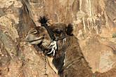Можно подняться на гору на верблюде – стоимость этой услуги примерно в 10-15 долларов, но обычно туристы и паломники предпочитают пешее восхождение.