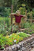 прикольное чучело на грядке, где демонстрируют, как растут помидоры и д.р.