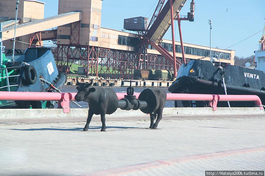 Корова-нефтяная труба