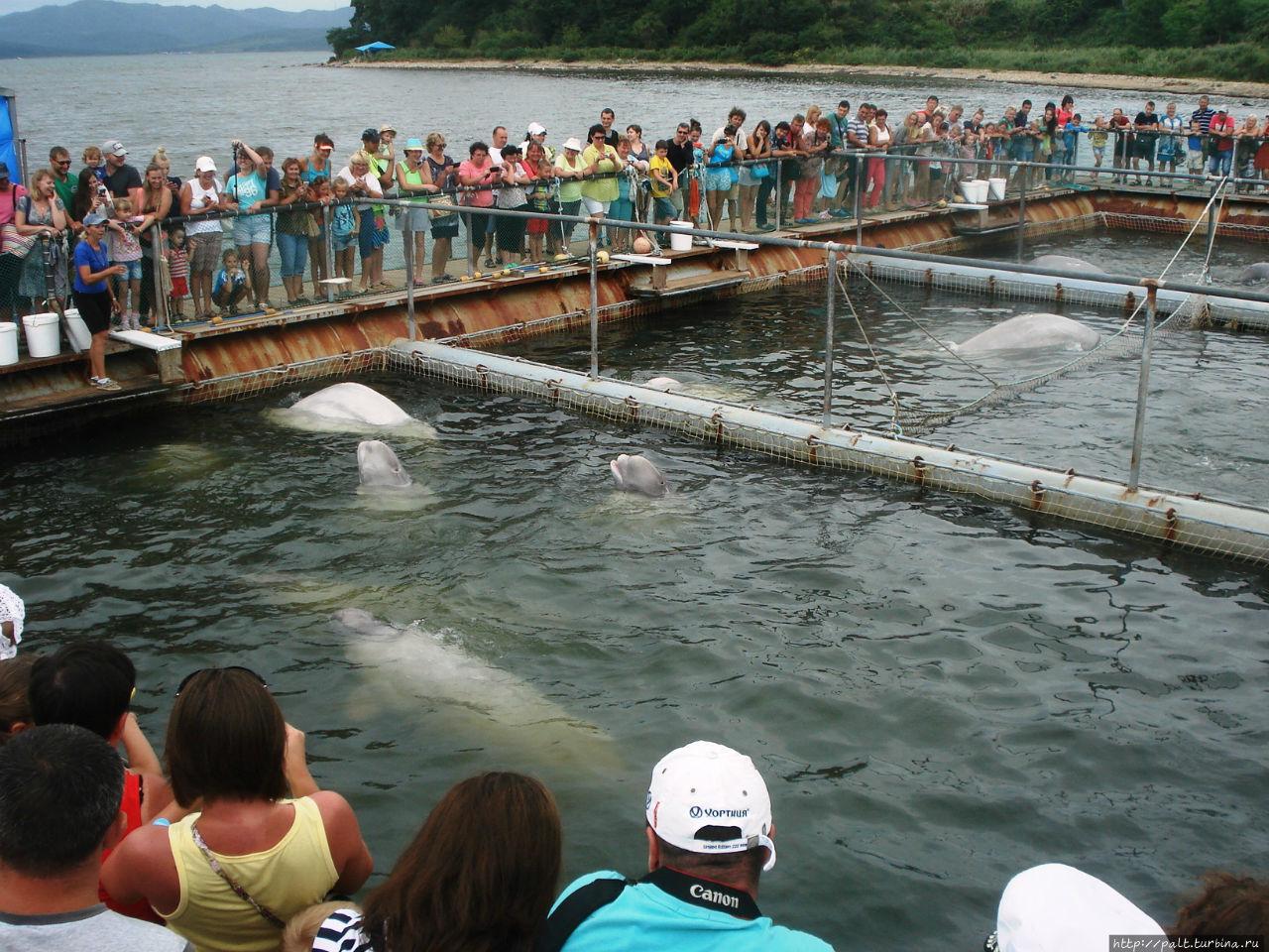 Центр реабилитации морских млекопитающих