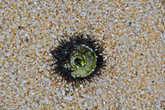 Напоследок, уже при выходе наверх, находка — выброшенный на берег скелет морского ежа, чем то похожая на морской глаз...