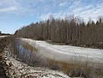 Вологодская область. По дороге между Вологдой и Вытегрой. Апрель. Весенний лес.