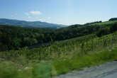 Теперь, минуя виноградники, к замкам.