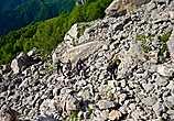 Обогнув гору справой стороны, начали подъем по хорошо различимой тропе, кое-где тропа обрывалась, превращаясь в каменные завалы и осыпи, но немного осторожности и эти участки были преодолены.