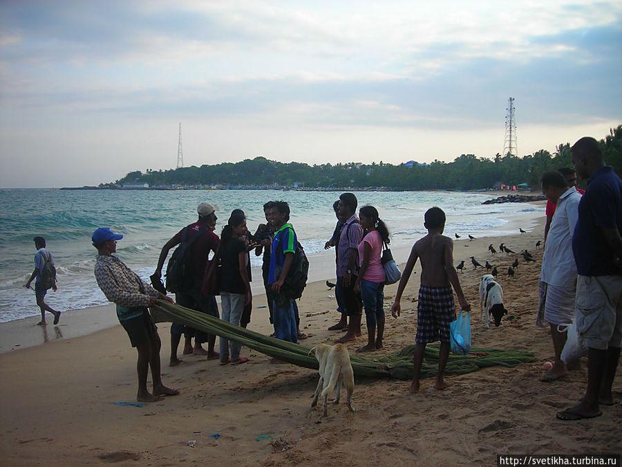 Сирипала, битель и  мангровые заросли Тангалла, Шри-Ланка