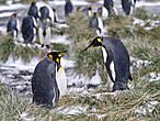чтоб вызвать на дуэль пингвину  пингвин на ласту наступил  а тот не чувствует как будто  лишь пот стекает по лицу