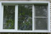 Павловские лимоны на окнах горожан.