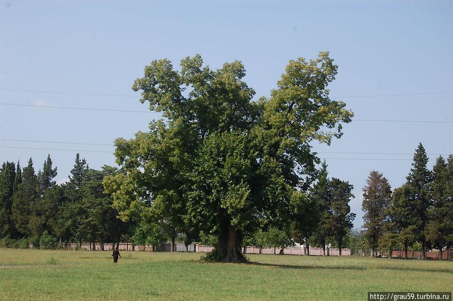 Одно из деревьев