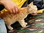 Выброшенный из кафе котёнок((