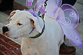пока я разглядывал бабочек — феечек, кто-то коснулся моей ноги, и это оказался вот этой чудно-воздушный пес