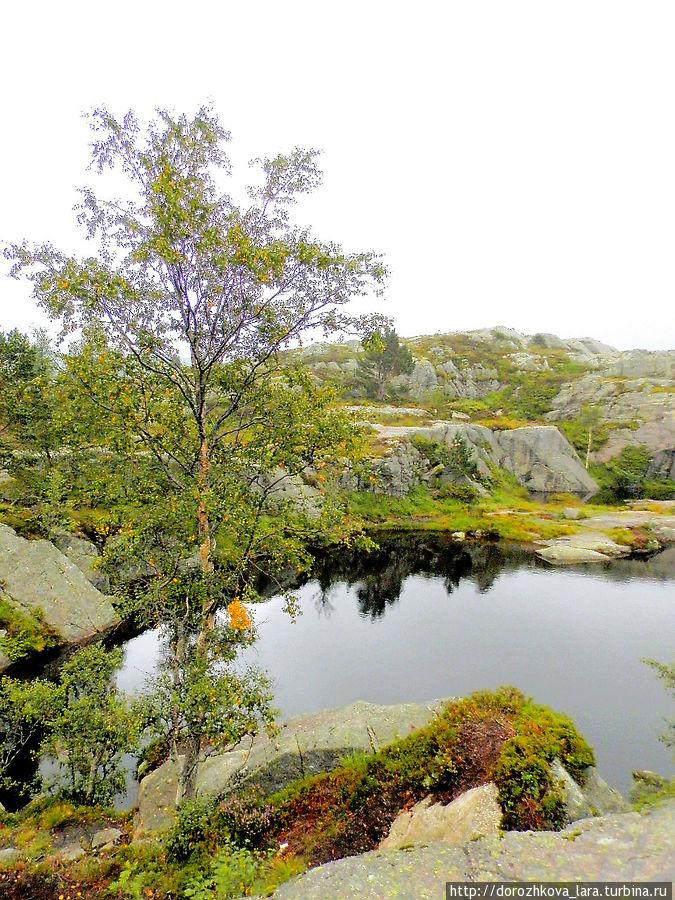 В пути открывались прекрасные виды скал и горных озёр от черных до голубых. Фотографировать было некогда, ограничение по времени сильно напрягало. Но несколько фоток я всё же  сделала. Прекестулен (Кафедра проповедника), Норвегия