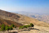 Зеленые деревья — очень большая редкость на фоне безжизненных гор.