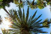и пальмы там тоже были ;)