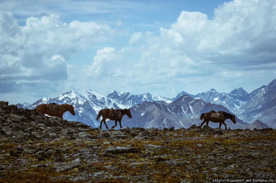 вверх на Кара-Тюрек Белуха гора (4509м) Природный Парк, Россия