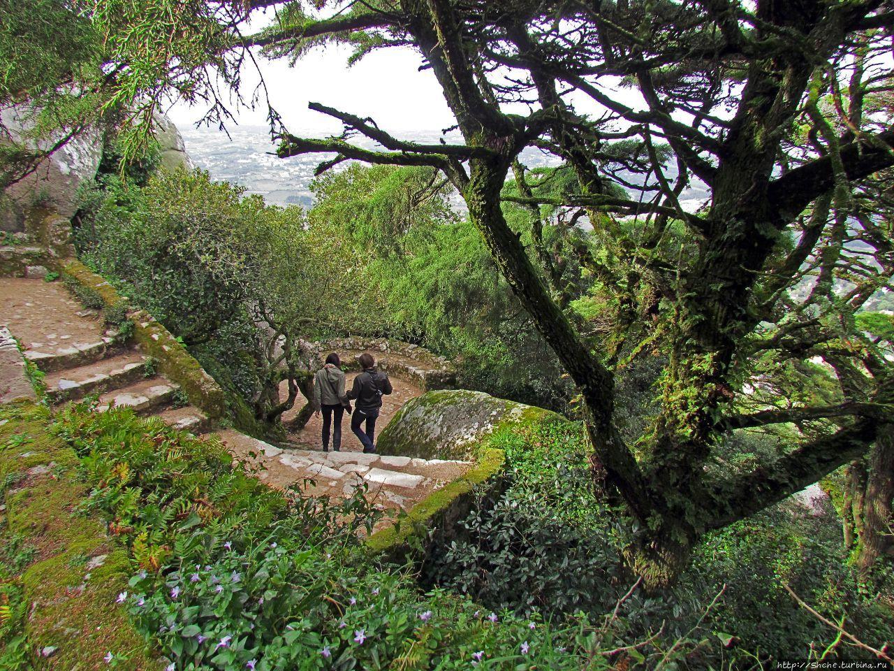 Живописная тропа в реликтовом лесу Синтры