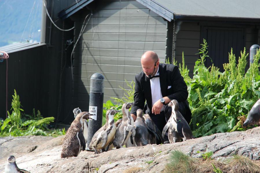 Кормление пингвинов.
