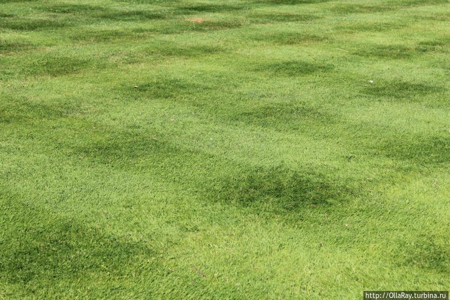 Идеальный лазенковский газон.