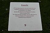 Уже в 1801 году придворный садовник Тершек высадил камелию на то место, где она находится и по сей день.