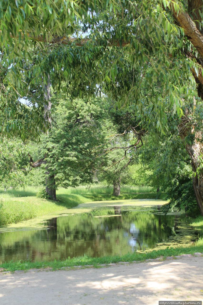 Самое живописное место в усадьбе — пруд у дома художника. Густо населён лягушками.