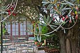 в летный теплый вечер, посидеть на этой террасе под оливковым деревом, одно удовольствие, запомнили место!