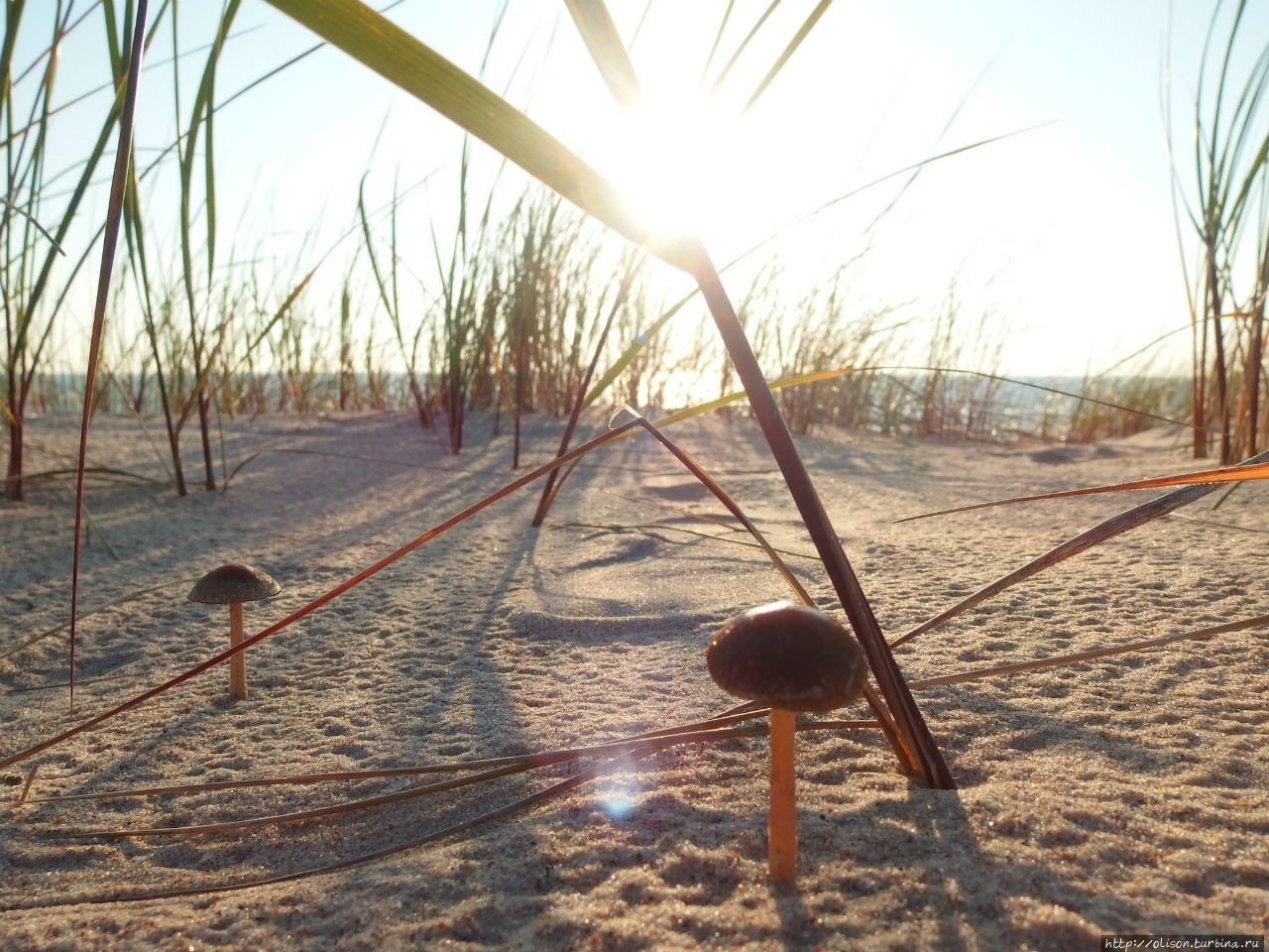 В дюнах Вентспилс, Латвия